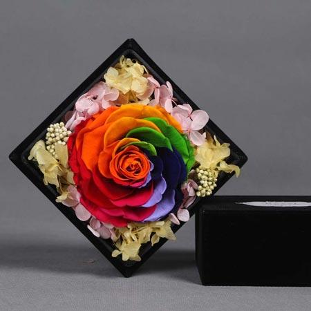 鲜花速递网-永生花 单朵彩虹