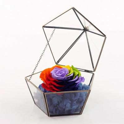 �花-五星玻璃花房 七彩玫瑰