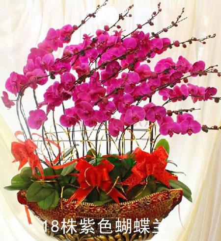 网上订花-蝴蝶兰
