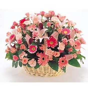 威海网上订花:春天的阳光