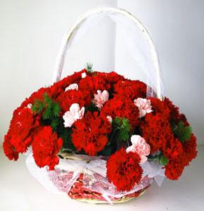 拉萨网上订花:怀抱