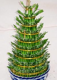 西安绿植花卉-开运竹