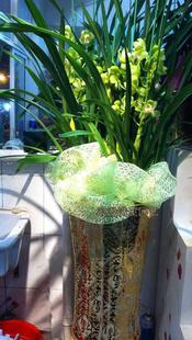 哈尔滨绿植花卉-大花蕙兰