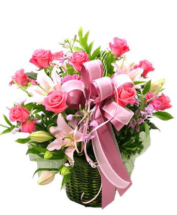 衡水鲜花:春天