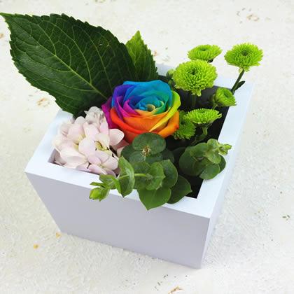 苏州永生花:彩虹玫瑰 爱的真言