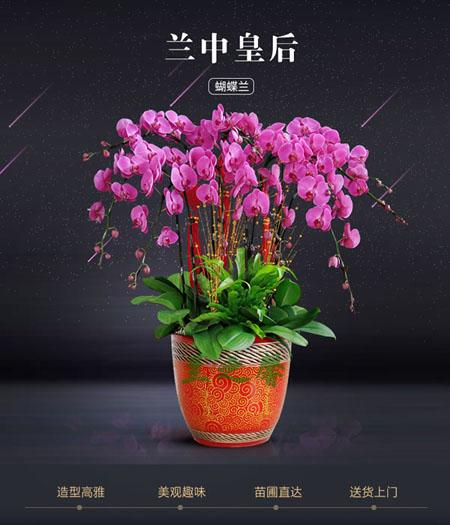 烟台绿植花卉-蝴蝶兰