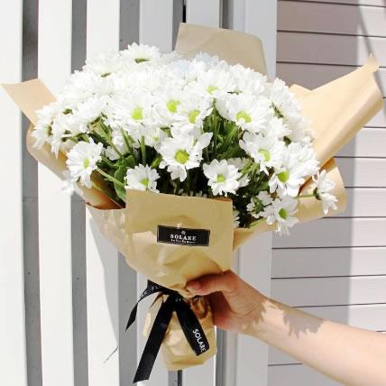 迭部鲜花-出水雏菊